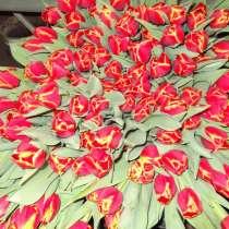 Тюльпаны, в г.Брест