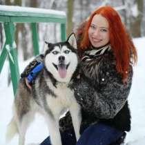 Кобели хаски для вязки и щенки на продажу, в Рыбинске
