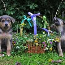 Очаровательные крошки-щенки Леся и Туся в добрые руки, в г.Москва