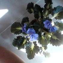 Фиалочка.(3 расцветки), в г.Жодино
