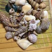 Раковина, ракушки Индийский океан, в Москве