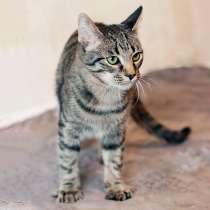 Красавец Марсель, чудесный полосатый котик-подросток в дар, в г.Москва