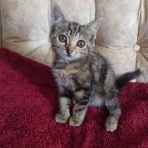 Котёнок Стрелка, в г.Краснодар