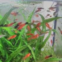 Аквариумные рыбки, в г.Витебск