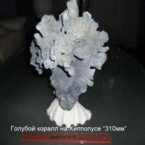 голубой коралл, в г.Челябинск