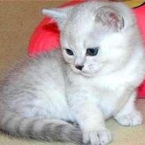 Шикарные клубные котята, в г.Москва