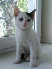 Найден котёнок 3-х месячный, в Ижевске