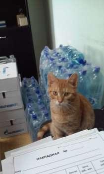 Пропал рыжий кот, в г.Чехов