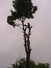 Срезка аварийных деревьев в Минске, в г.Минск