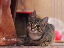 Котята ищут дом, в Москве