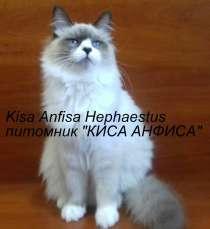 Невские маскарадные котята, в г.Полтава