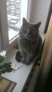 Отдам даром кот, в Челябинске