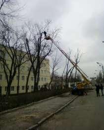 Спил дерева, в Нижнем Новгороде