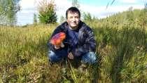 Александр Александро, 50 лет, хочет найти новых друзей, в Нижнем Новгороде