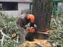 Удаление деревьев. Спил аварийного дерева, в Старом Осколе