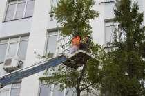 Удаление деревьев и зеленых насаждений по России под «Ключ», в Владимире