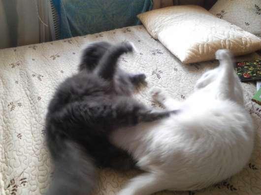 Отдаю кота в добрые руки
