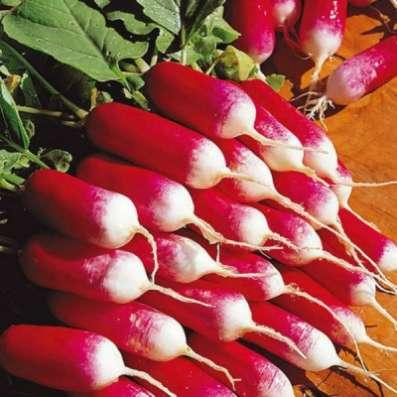 Семена редиса для выращивания на балконе