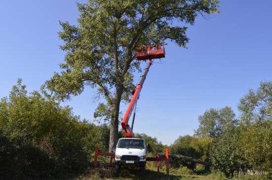 Удаление деревьев в Старом Осколе Фото 1
