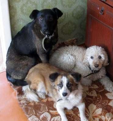 Квартирная передержка собак