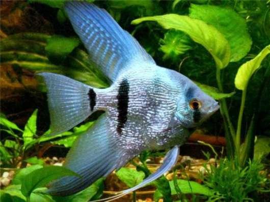Оформление Обслуживание аквариума