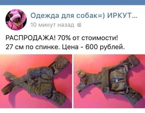 Одежда той-терьер собака щенок в Иркутске Фото 4