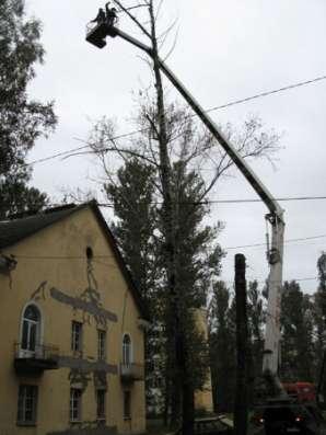 Спилить дерево, деревья в г. Самара Фото 4