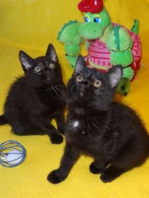 Котята в добрые руки в Тюмени Фото 4