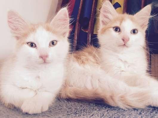 Котята в дар в г. Минск Фото 3