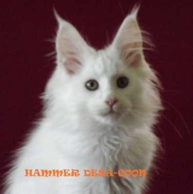 Котята мейн-кун в Новороссийске Фото 2