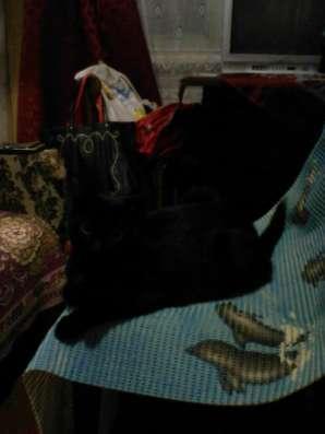Отдам даром отдам котят в добрые руки в Перми Фото 2