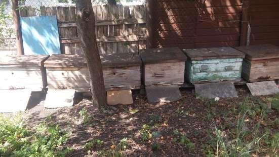 Продам улики с пчёлами