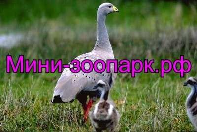 Гуси в Москве Фото 5