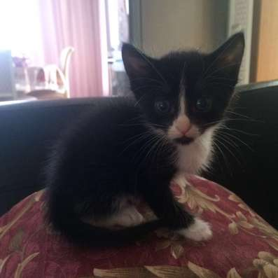 Милые котята даром в Краснодаре Фото 3