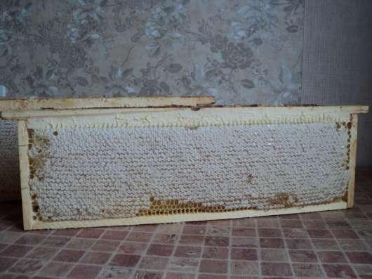 Мед в сотах 2016г. со своей пасеки продам