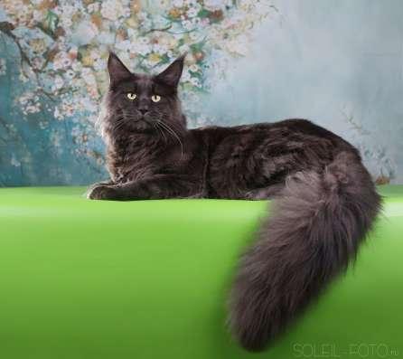 Котята Мейн Кун ждут своих родителей!)))