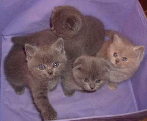 Клубные котятки