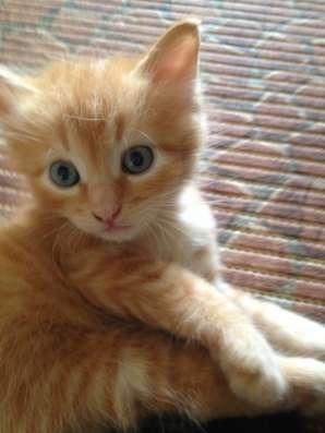 Отдам котят в Саратове Фото 1