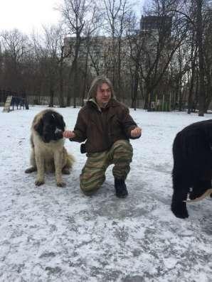 Дрессировка собак в Москве Фото 1