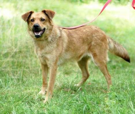 Спортивная и энергичная собака Молли в дар