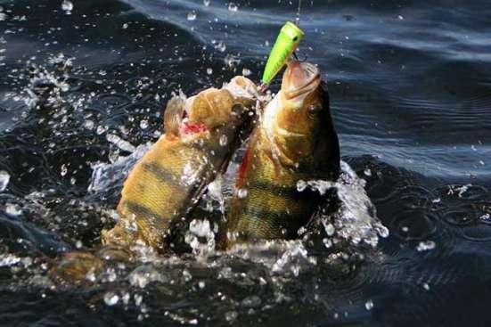 Отдых на базе рыбалки и охоты на Волге