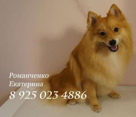 Стрижка собак и кошек в Новопеределкино в Москве Фото 1