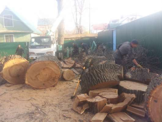 Спилить дерево, деревья в г. Самара Фото 2