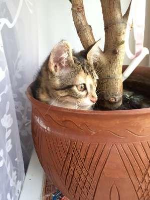 Милый котёнок в ласковые ручки, с добрым сердцем в г. Нальчик Фото 5