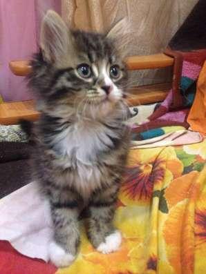 Продам котят в Новосибирске Фото 4