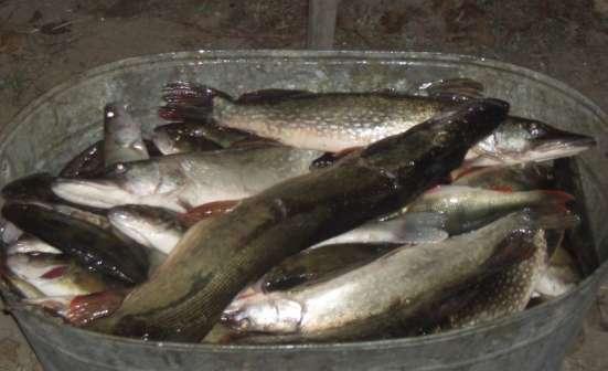 Рыбалка, охота, отдых в Дельте Волги под Астраханью