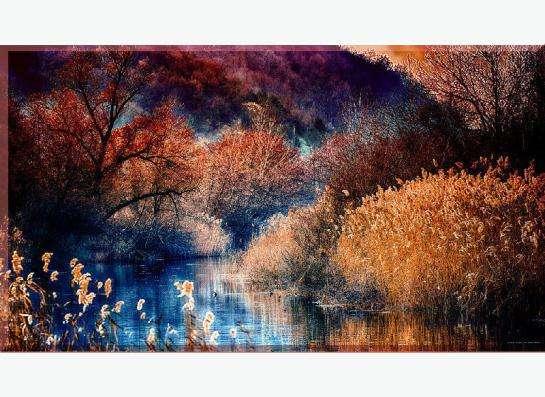 Фотокартина на холсте: Поздняя осень в лесу